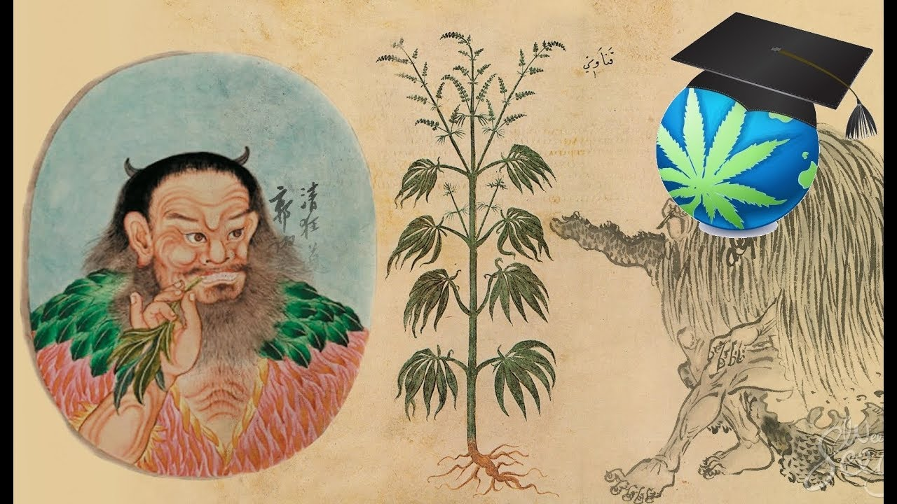 a description of the use of marijuana as a drug in the ancient china Some people who suffer from epilepsy believe that marijuana stops their seizures two compounds found in the drug, thc and cbd, may have medical benefits according to a recent paper in the journal of the international league against epilepsy (epilepsia), marijuana was used to treat a.
